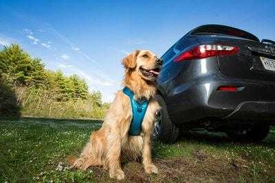 Pet Travel Safety Tips Video