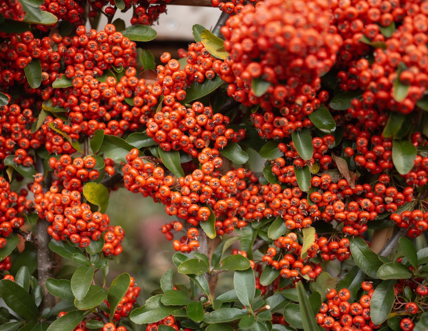 Eine Nahaufnahme einer Pflanze im The Nunhead Gardener