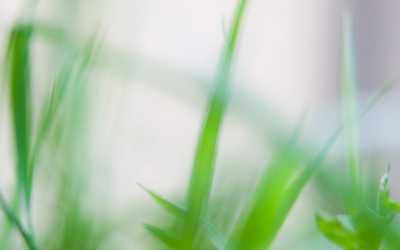 Blades of grass