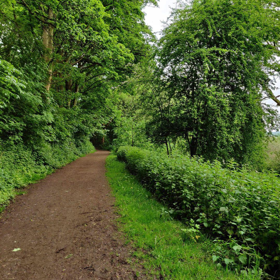 Woodhouse Ridge dirt path