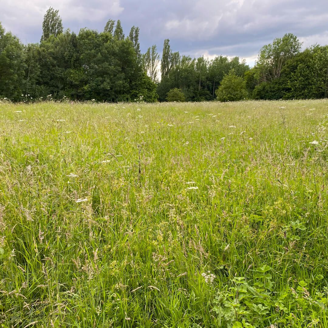 Kirkstall Valley Nature Reserve wild flower meadow
