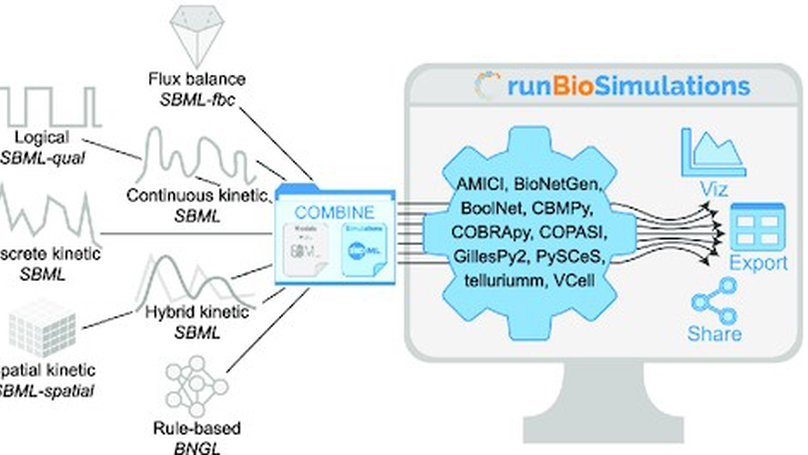 RunBioSimulations: an extensible web application that simulates a wide range of computational modeling frameworks, algorithms, and formats