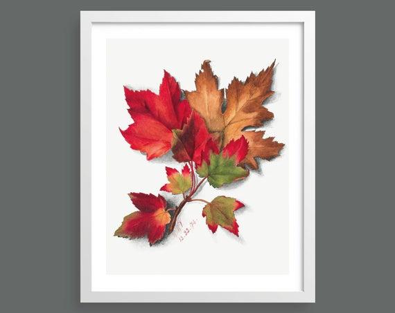 Autumn Leaves by Mary Vaux Walcott