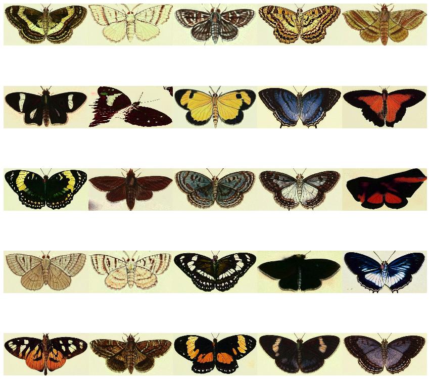 butterflies_1.png