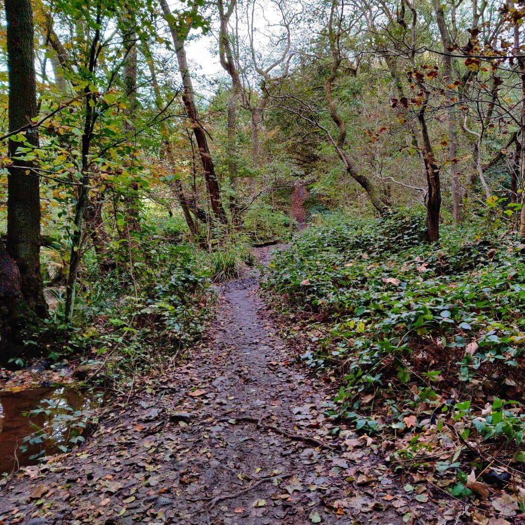 Adel wood muddy path