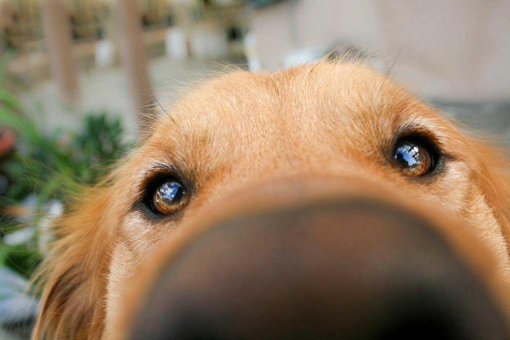 Botanical Basics for Your Dog