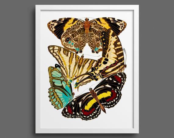 Papillons by EA Seguy - plate 5