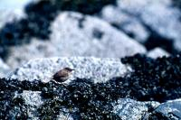 A Wren on the rocks