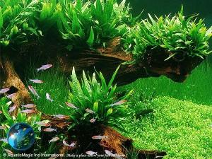 Five Types of Aquarium Plants