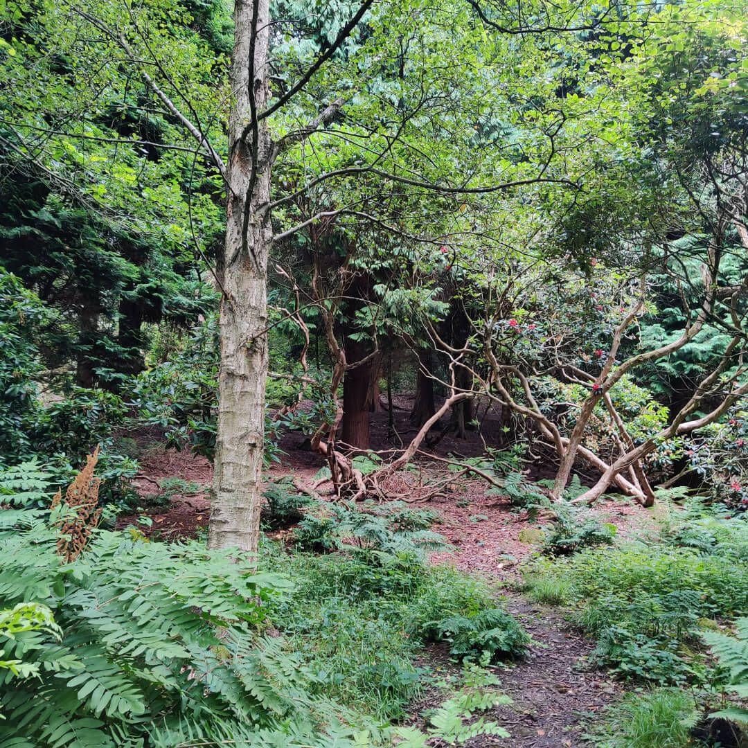 The Hollies Leeds path through woods