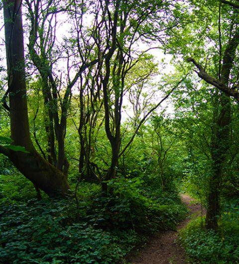 Hetchell Wood