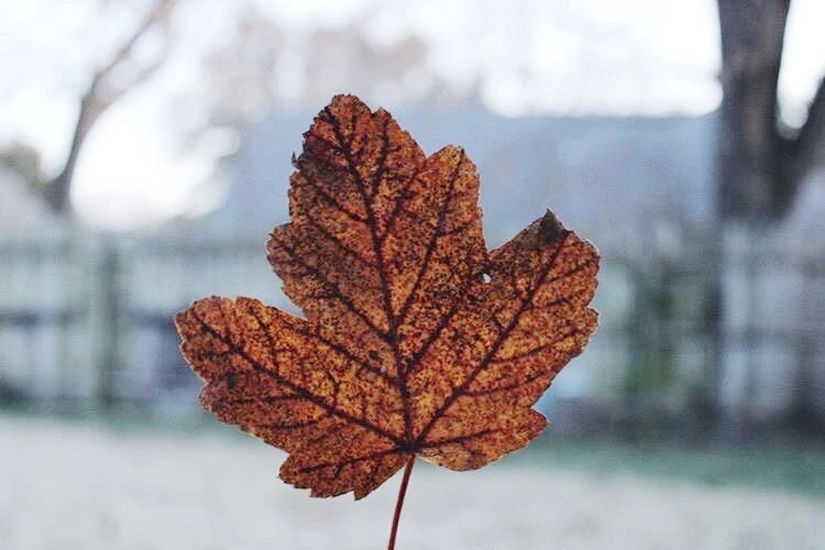 Image of: leaf