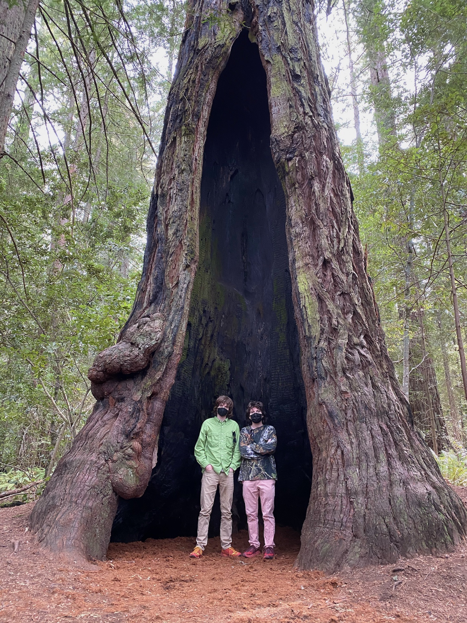 Sammy and me standing inside of a hollow redwood tree.