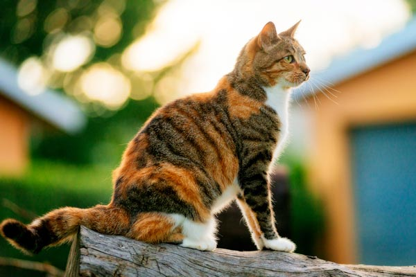 A cat sitting on a log outside.