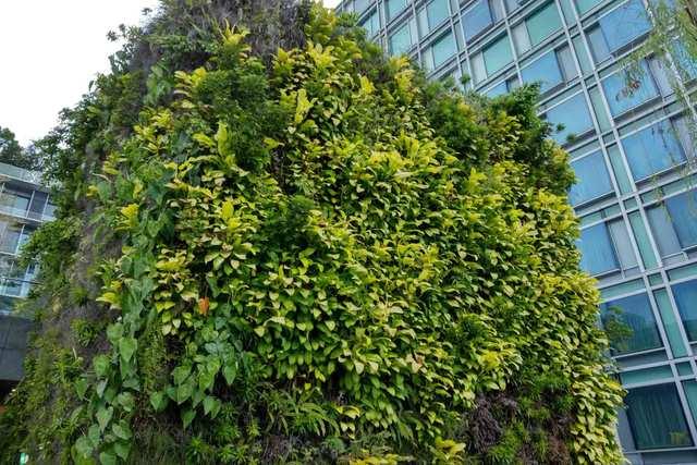 Magic Green - Green Walls
