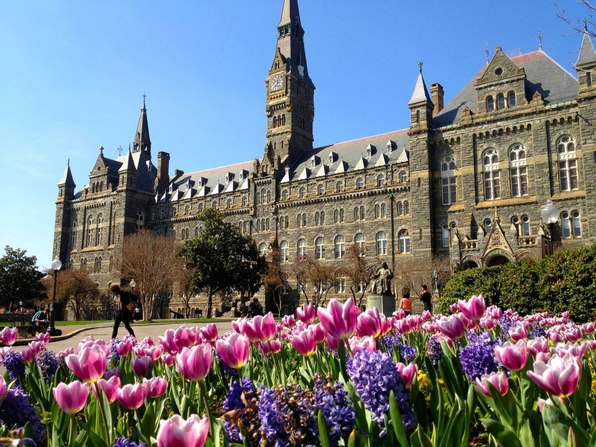 The clocktower rises above Healy Hall with pink flowers in the foreground