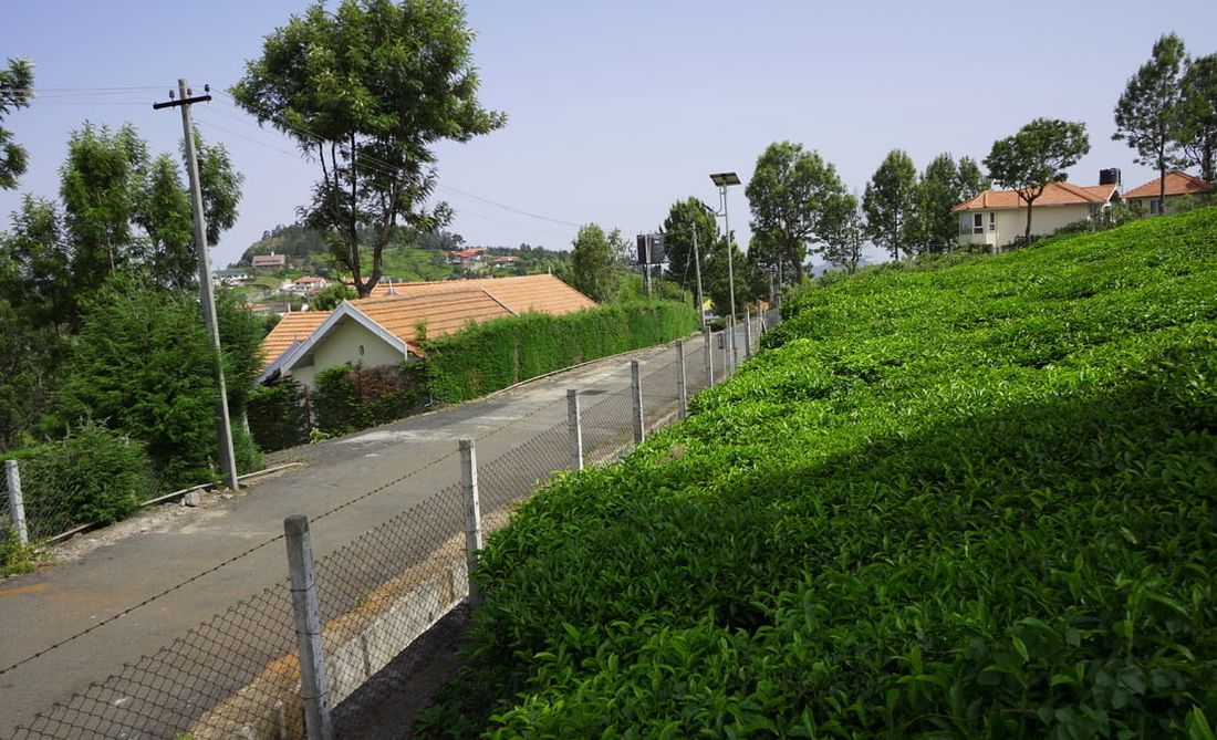 Tarred road at Sua Serenitea on one of the highest plots