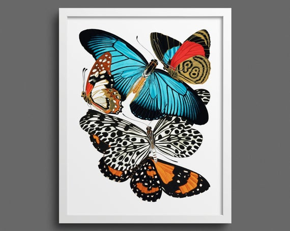 Papillons by EA Seguy - Plate 11
