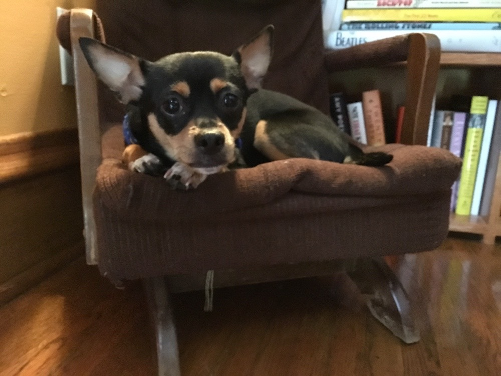 Basil in my childhood chair [6-1-19].