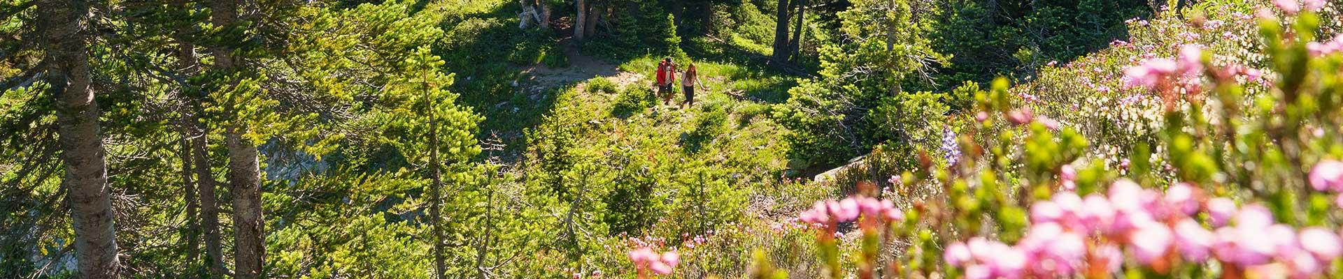 Hiking in Wildflowers