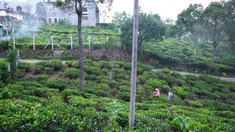 Neighbouring house and tea estate