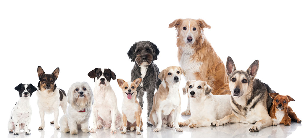 Some of the popular dog breeds