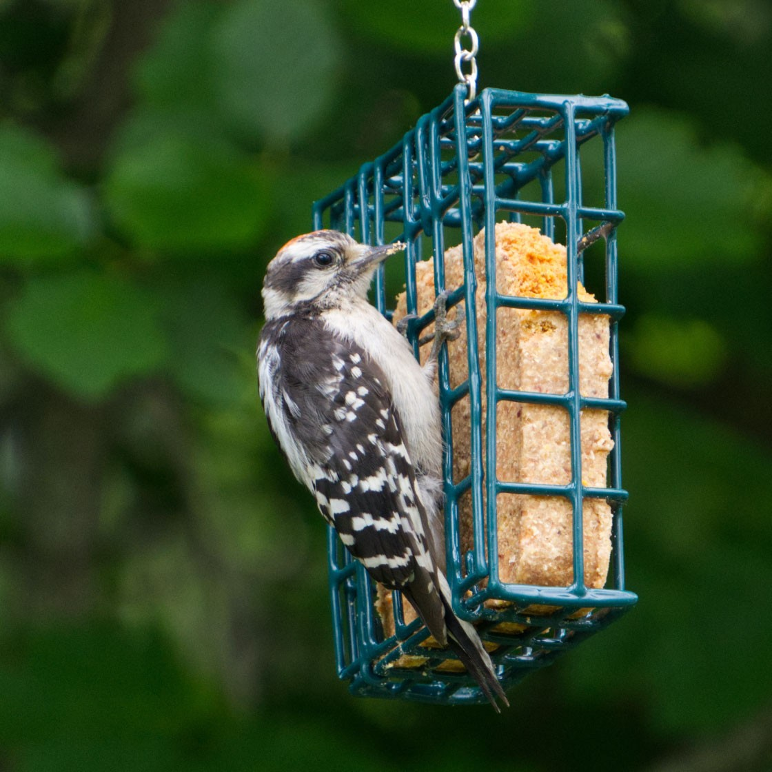 A small bird eats at an outdoor bird feeder