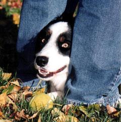 Milo and His Tennis Ball