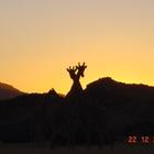 Giraffe_Sunset_funny
