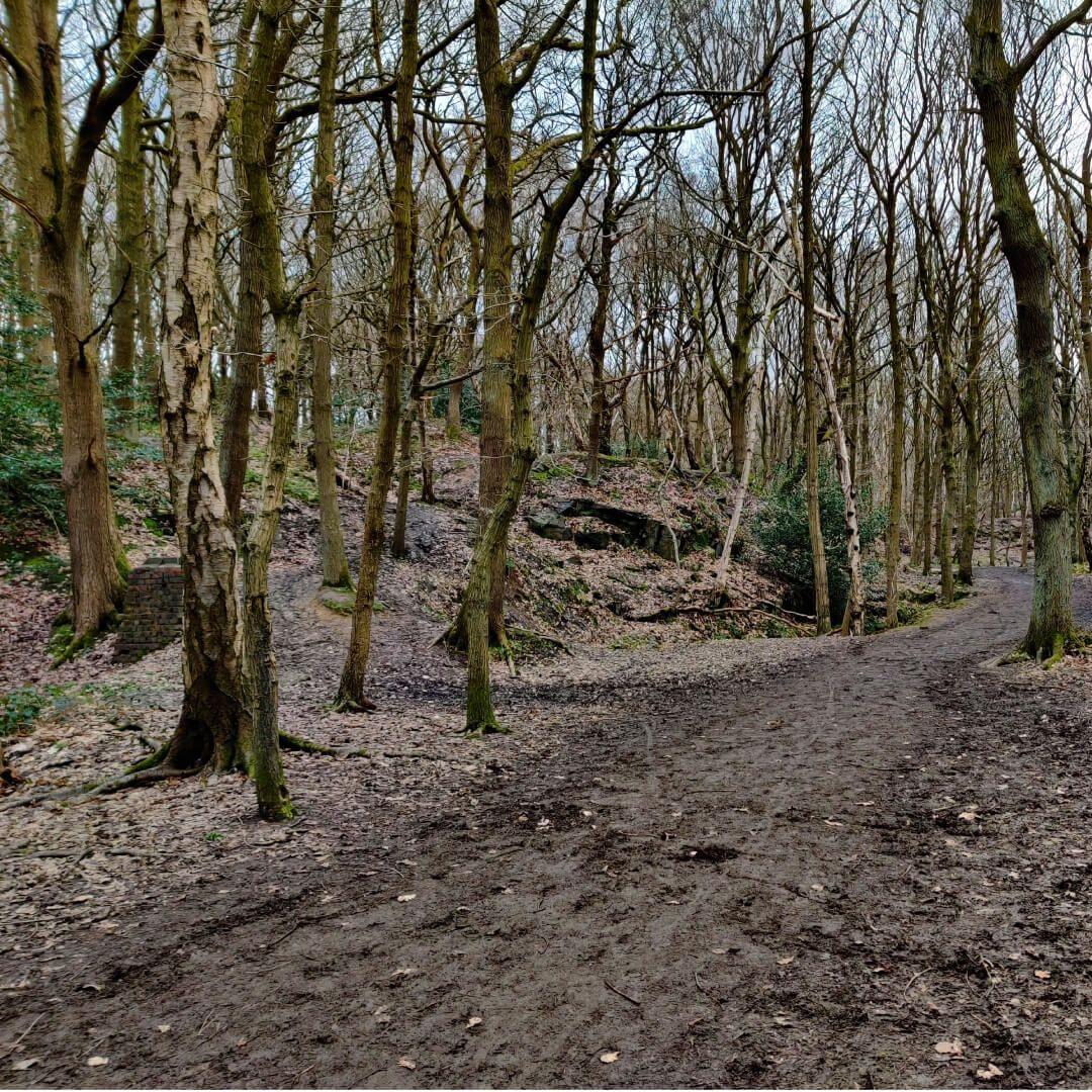 Bramley Fall Woods muddy path