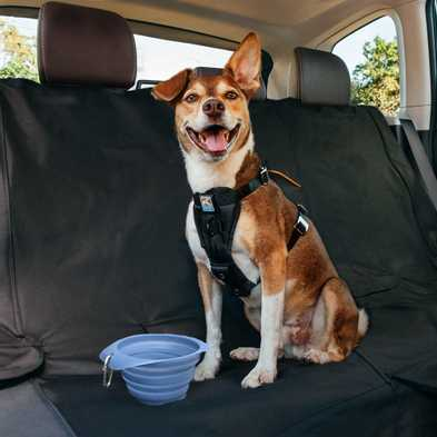 Training Your Dog to Ride in the Car: Foolproof Steps