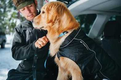 How to Measure Your Dog: Coats & Harnesses