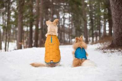 Fun Winter Activities You Can Do With Your Dog