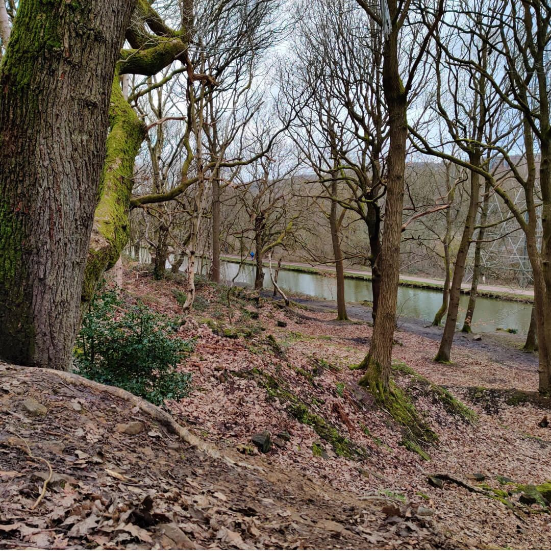 Leeds Liverpool Canal from Bramley Fall Woods