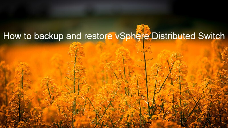 how-to-backup-and-restore-vsphere-distributed-switch-logo