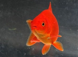 How to Tell If Your Fish Are Sick