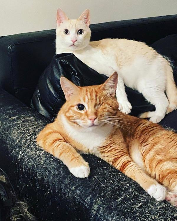 Коты Стои: беленький — Виджет, рыжий — Пиксель / инстаграм-страница Стои