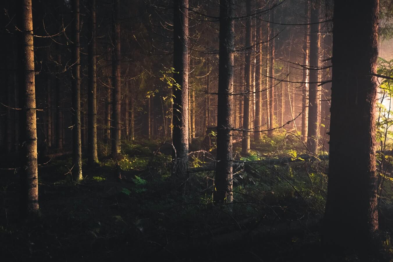 How to use the Isolation Forest model for outlier detection