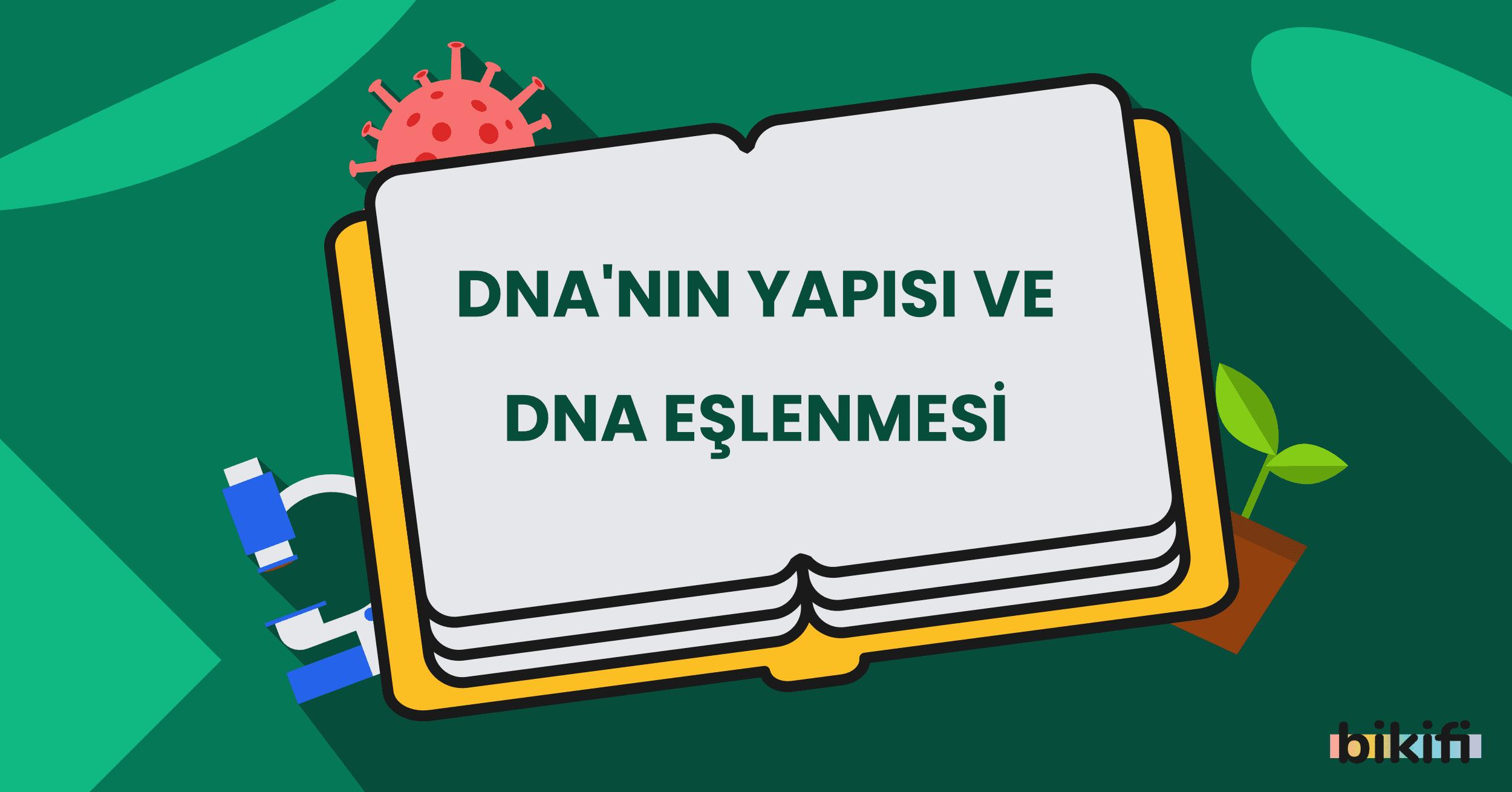 DNA'nın Yapısı ve DNA Eşlenmesi