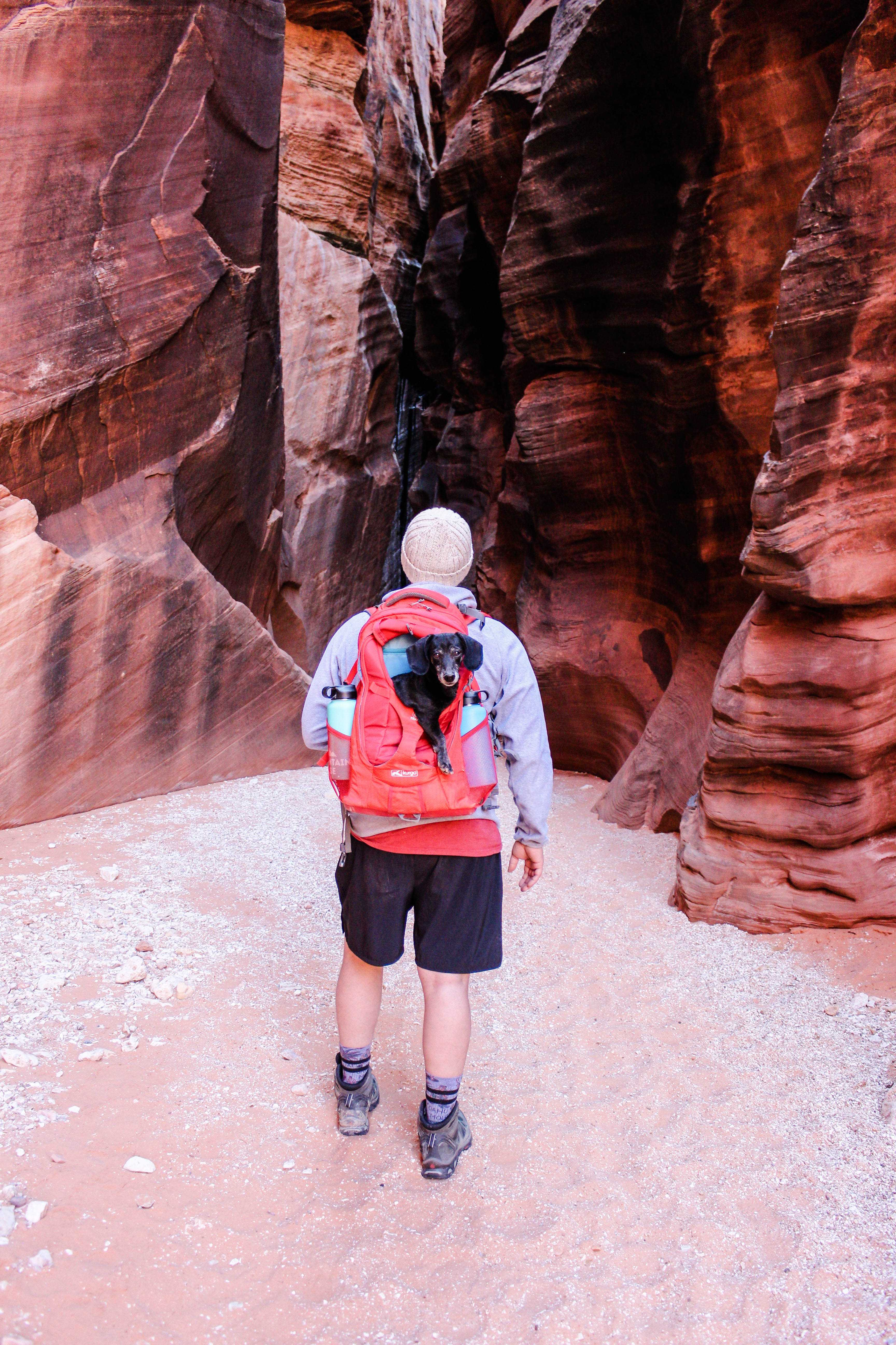 Miles of Adventures:  Kurgo G-Train Dog Carrier Backpack Review