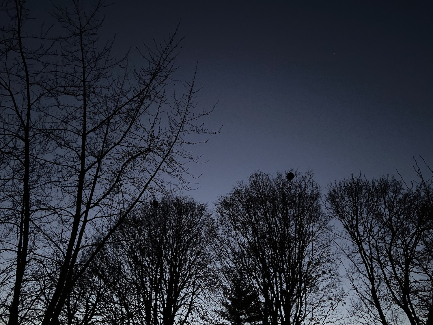 The silhouettes of trees at dusk as seen on a Chicago city street