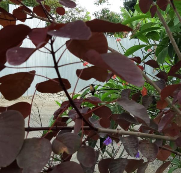 un colibri entre las hojas de un arbol