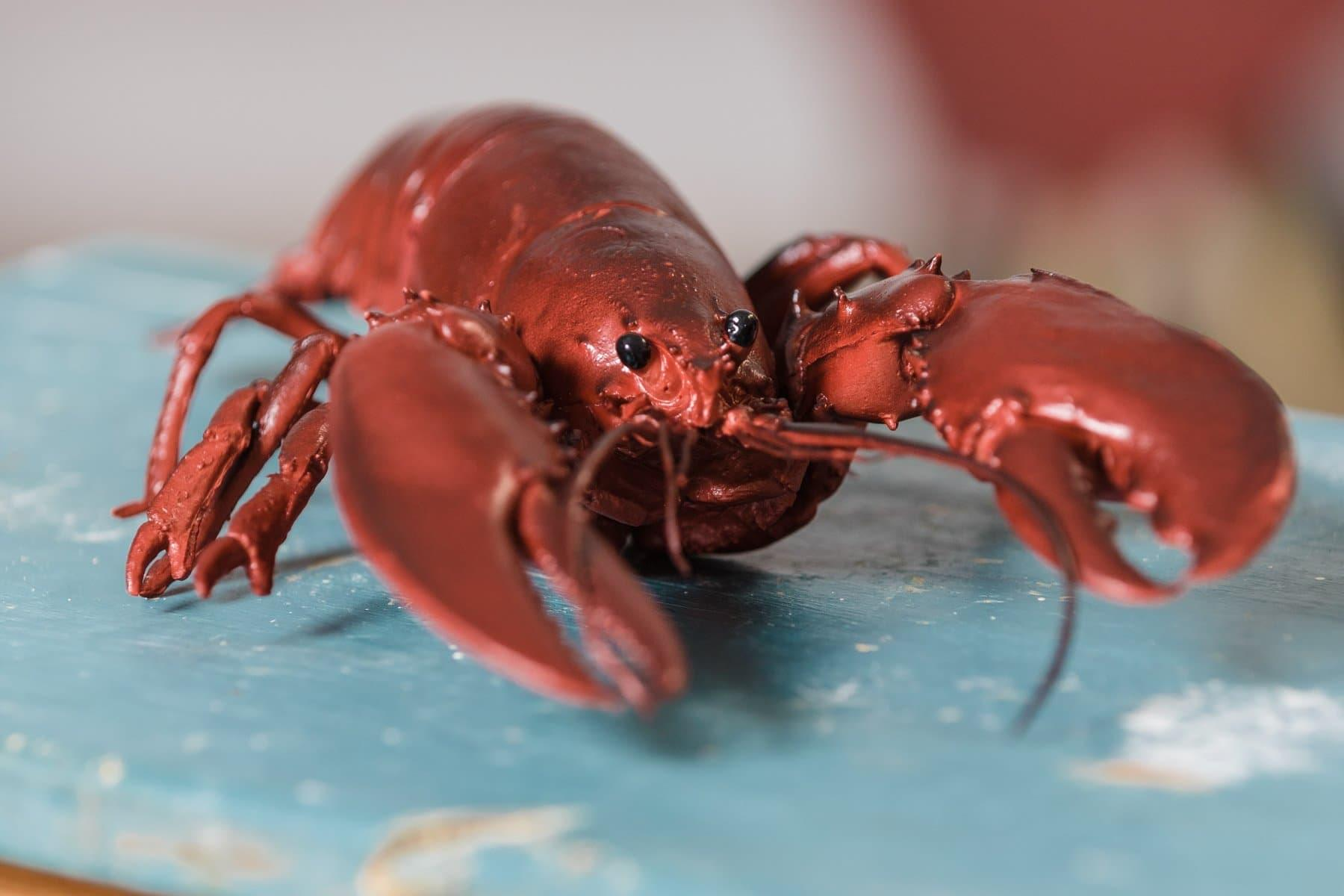 Our very own taxidermy lobster, 'Satan's Pinch'