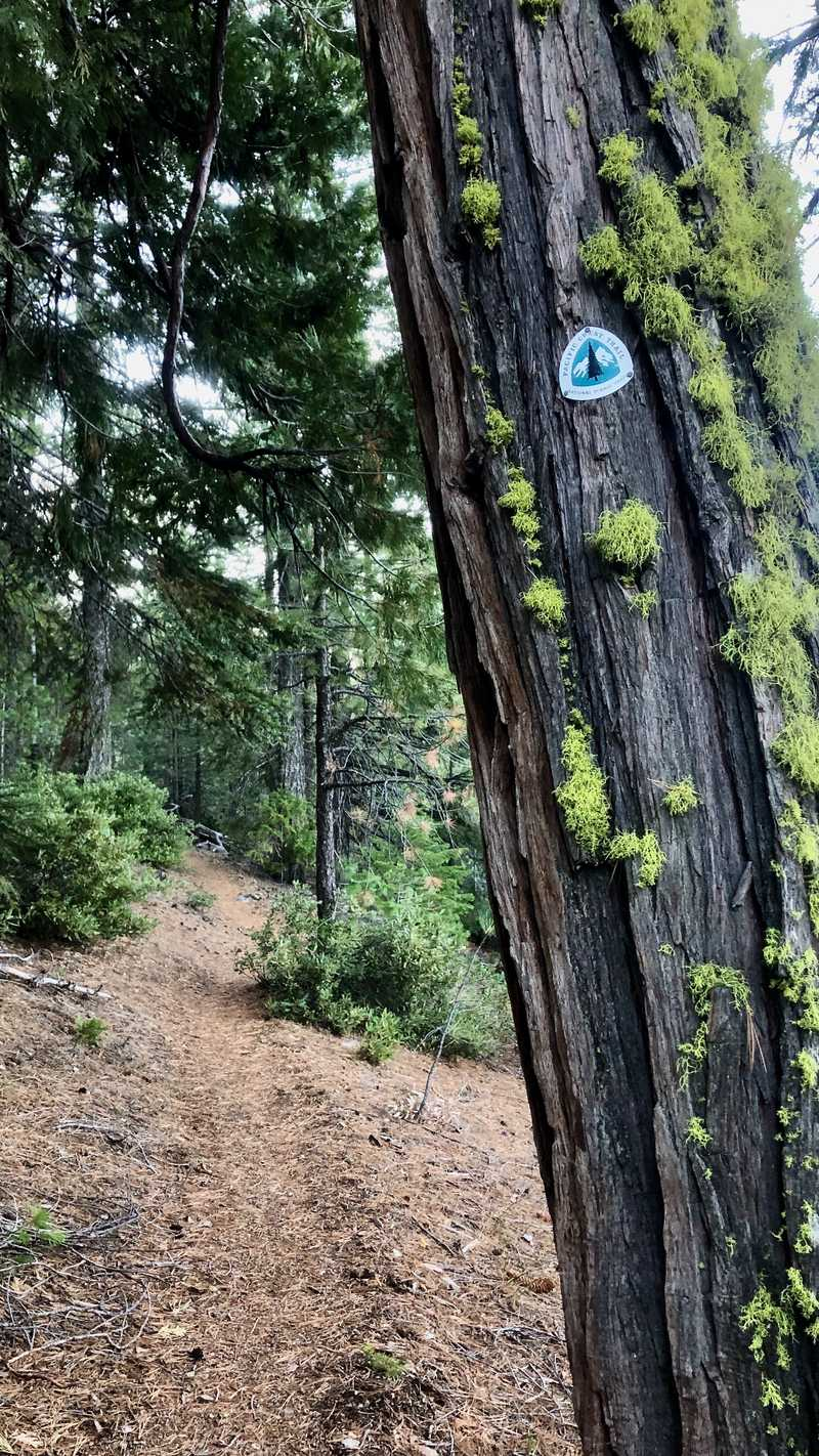 A PCT emblem is mounted on a tree next to the trail