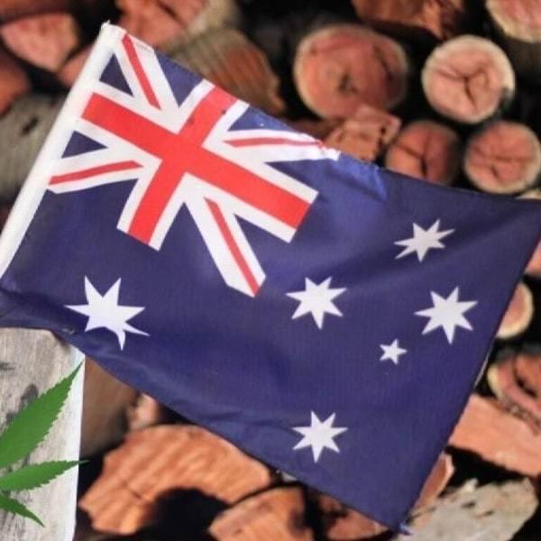 Why Marijuana Should Be Legal