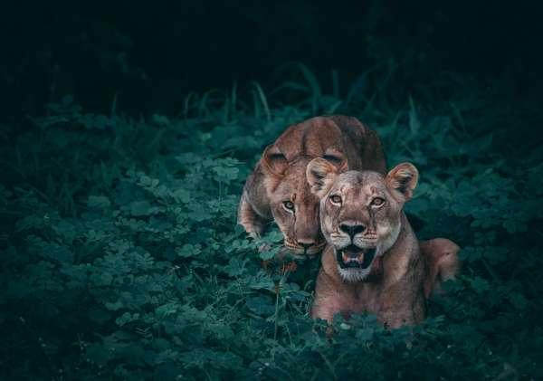 Wildlife - Geran De