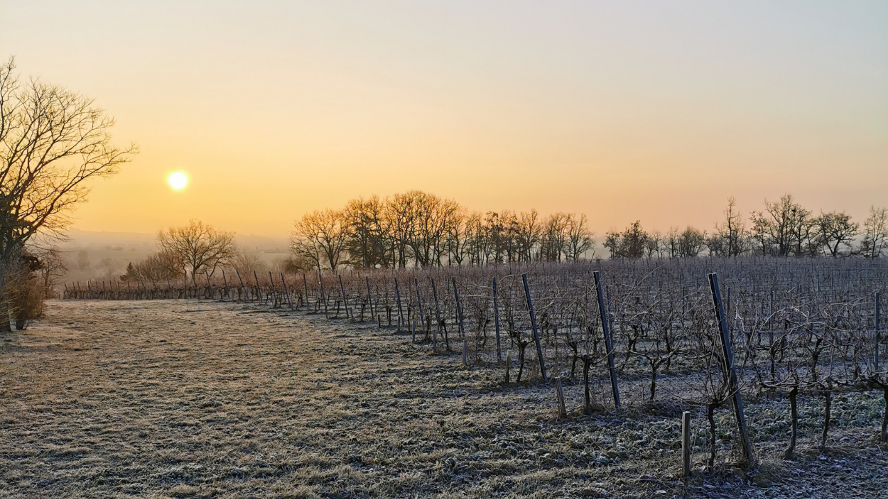 Domaine Gayrard - hiver 2021