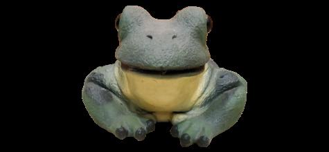 Frog photo