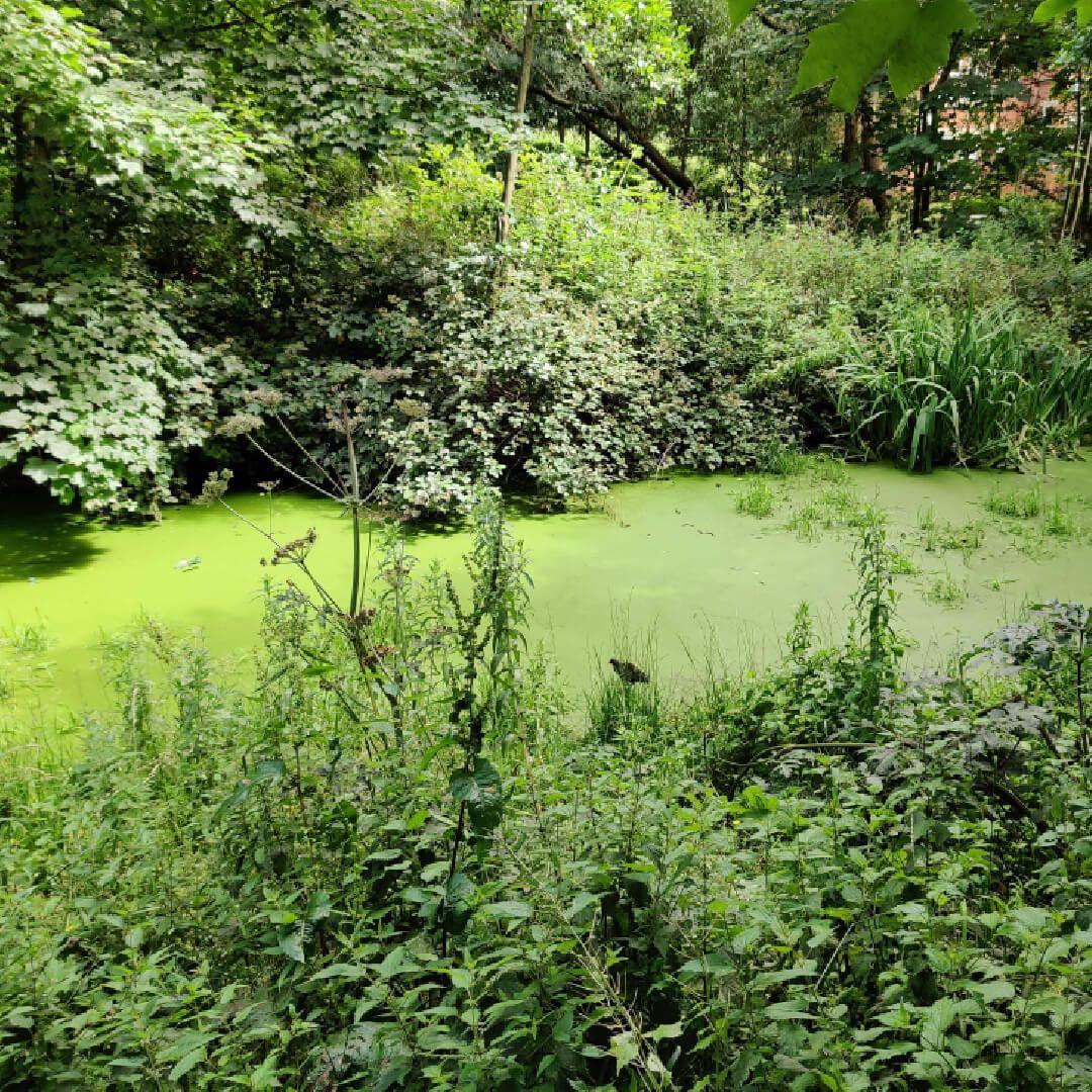 Grove Lane Pond