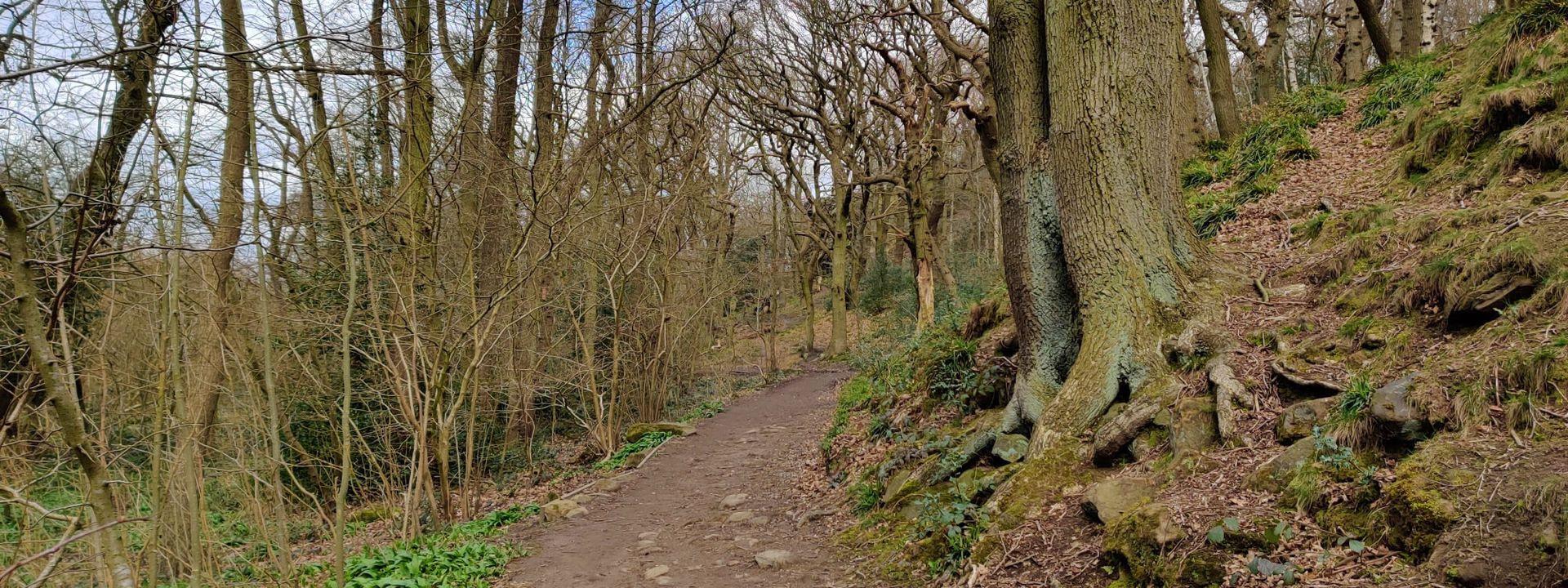 Path through Hetchell Woods